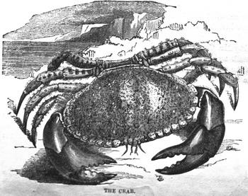 1028-Crab.jpg